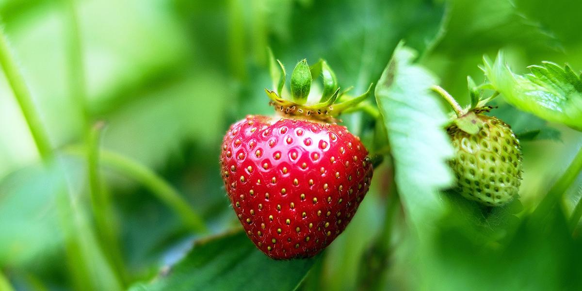 Obst aus der Region Hohenlohe